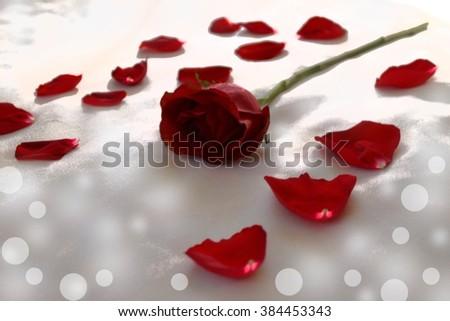Rose and rose petal -  abstract art - bokeh - stock photo