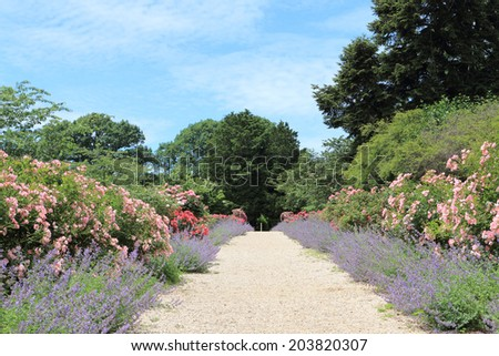 Rose Arch In the Garden - stock photo