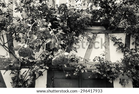 Rose bush overgrowing half timbered house. French countryside. Aged photo. Black and white. A game of light and shadow. - stock photo