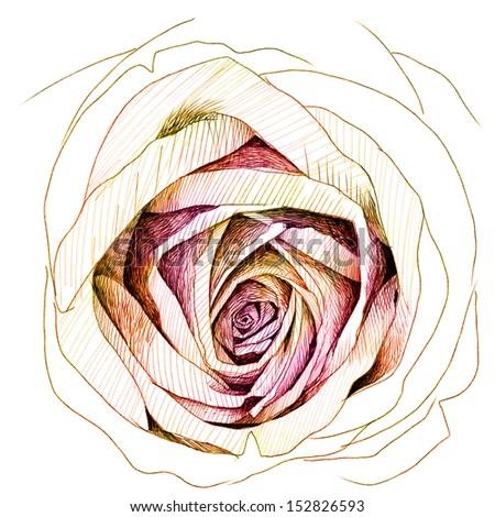 Rose : colors-pencil sketchbook (image version) - stock photo