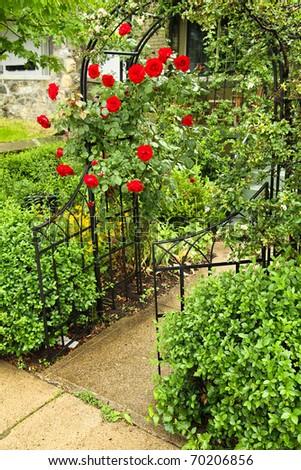 Rose covered walkway - stock photo