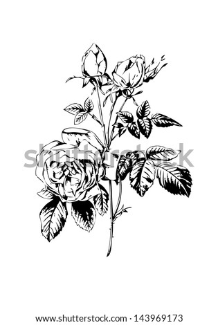 rose flower black white illustration - stock photo