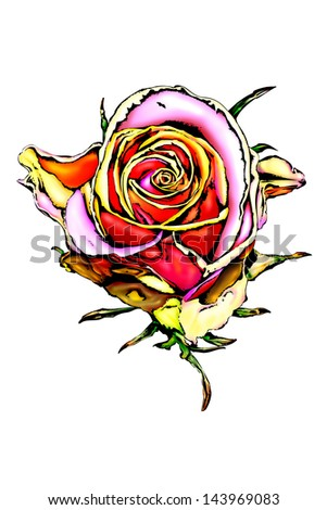 Rose flower color - stock photo