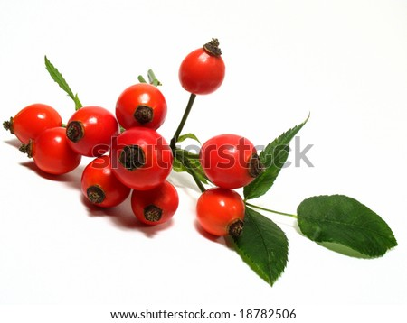 Rose hip - stock photo