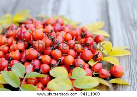 rose hips on a wooden table - stock photo