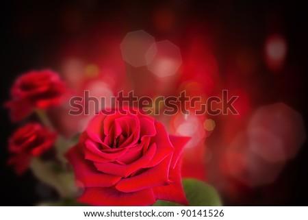 Rose in dark background - stock photo