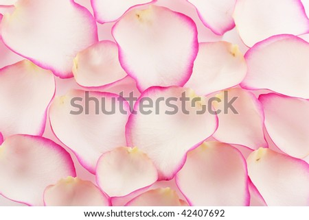 Rose Leaf - stock photo