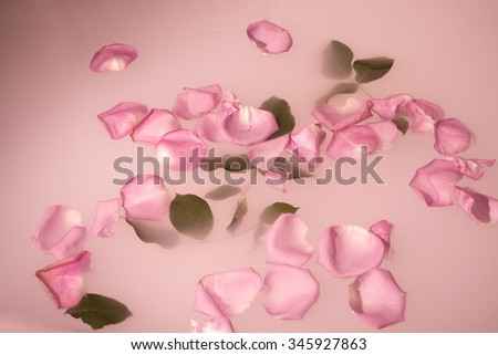 rose petals and leaves float on the milky water, closeup, underwater is white tulle - stock photo