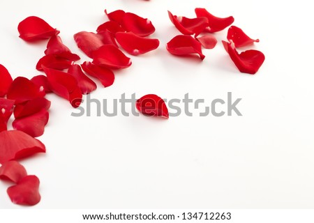Rose petals background - stock photo
