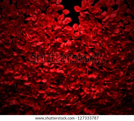 Rose petals background on black ground - stock photo