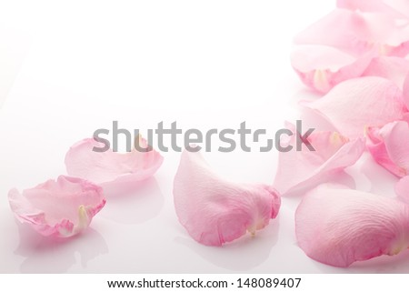 Rose petals isolated on the white background. - stock photo