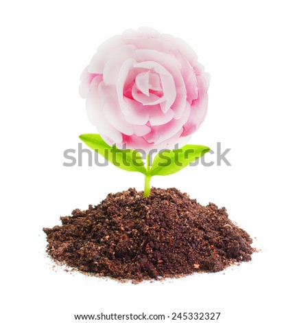 Rose seedling growing in a soil.  - stock photo