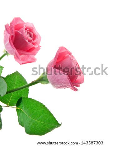 rose stationery - stock photo