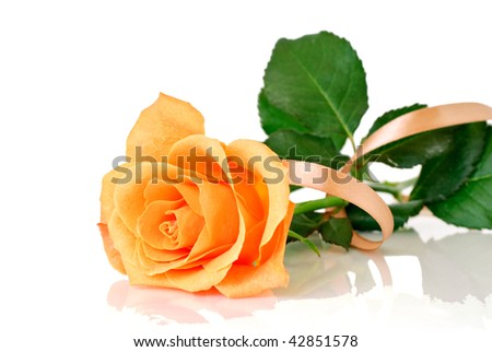 Rose with ribbon - stock photo