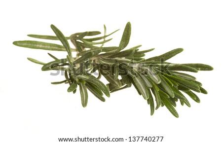Rosemary - stock photo