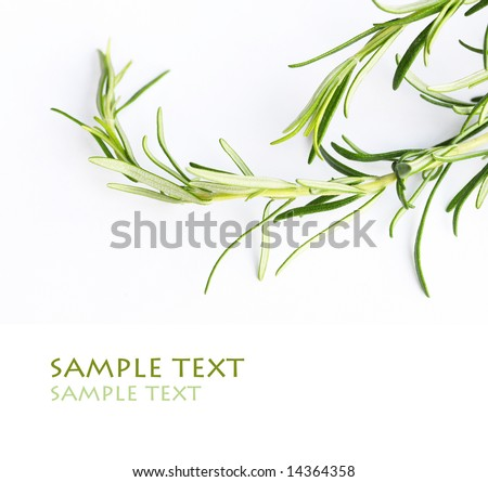 rosemary against white background - stock photo