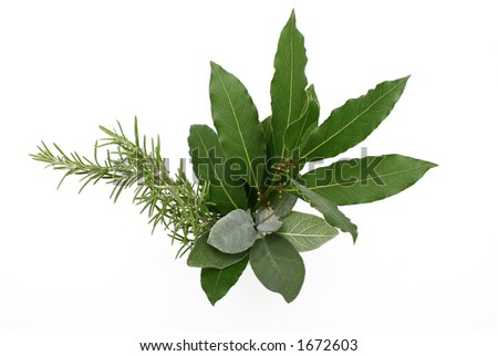Rosemary, bay laurel and sage, isolated - stock photo