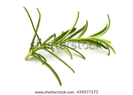 Rosemary leaves - stock photo