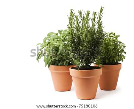 Rosemary, sage and oregano herbs isolated on white - stock photo
