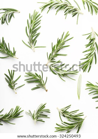 Rosemary twig on a white background - stock photo