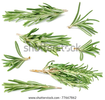 Rosemary twigs isolated on white - stock photo