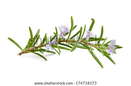 rosemary with flowers isolated on white background - stock photo