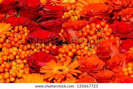 Roses and Gerber Daisy, Orange Flowers, Warm Tone and rowanberry - stock photo