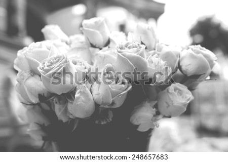 Roses B&W vintage style - stock photo