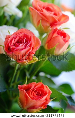 Roses flowers  - stock photo