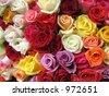 Roses in Morning Market, Paris - stock photo