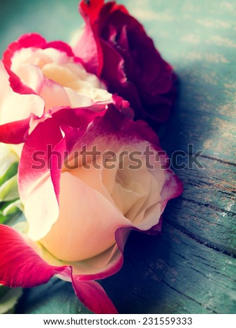 roses in the vintage arrangement - stock photo