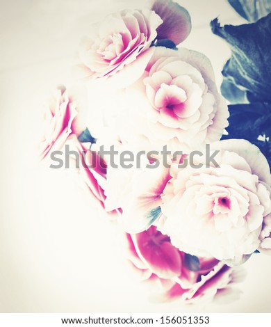 Roses in vintage style/ Pink flower background/ holidays background with beautiful roses - stock photo