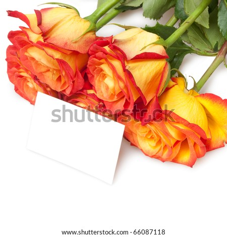 roses isolated on white with card - stock photo