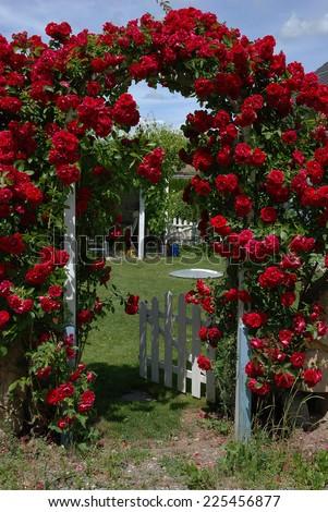 roses on a garden door - stock photo