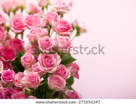 roses  on a pink background - stock photo