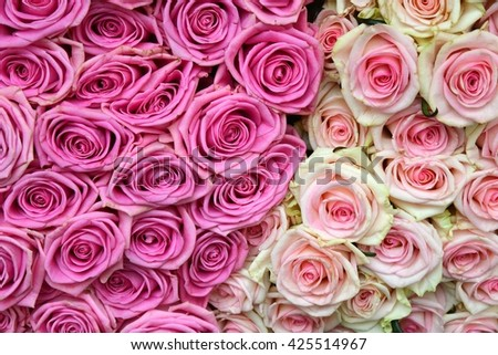 Roses. Roses background. Fresh roses. Roses for love. Roses card. Pink roses.  Roses as background. - stock photo