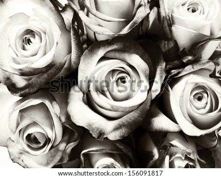 Roses. Vintage processed. Wedding concept  - stock photo