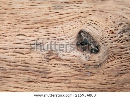 Rotten driftwood Background and texture  - stock photo