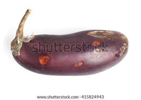 Rotten eggplant isolated on white background - stock photo