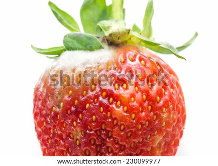 Rotten strawberries over white background - stock photo