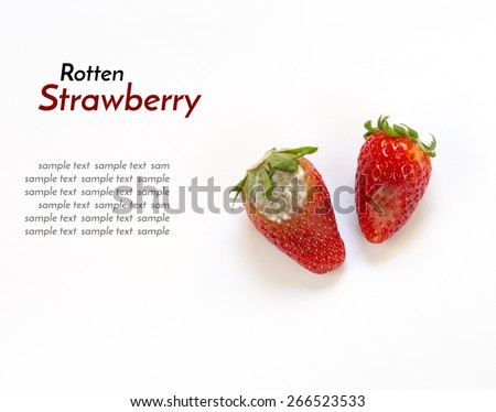 Rotten strawberry isolated on white background with sample text - stock photo