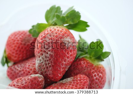 rotten strawberry with mildew - stock photo