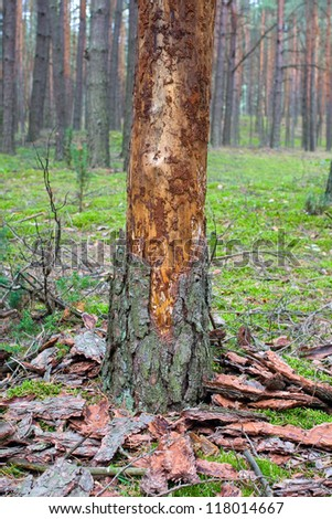 rotten tree - stock photo