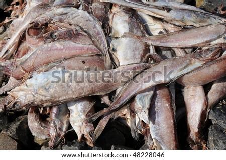 Rotting fish on dock - stock photo