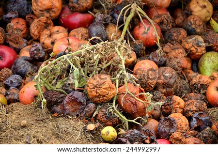 Rotting fruit compost, apples, plums, pears - stock photo