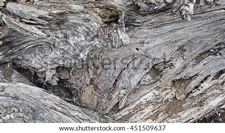 Rotting Wood Tree Stump Background - Gray wooden surface pattern of and old weathered tree trunk, natural rotten wood abstract background photo. - stock photo
