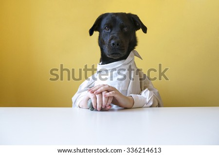 Rottweiler Labrador mixed breed dog at dinner table - stock photo