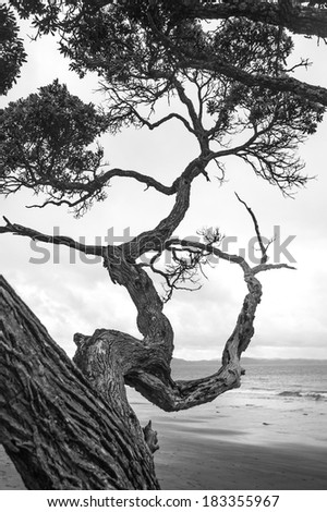 Rough crooked branches of a tree, monochrome - stock photo