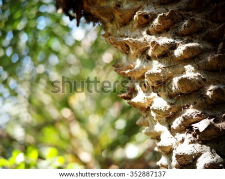 rough light brown surface texture of a palm tree under natural sunlight with green outdoor natural bokeh background  - stock photo