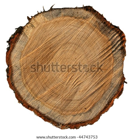 rough oak circle cut  isolated on white background - stock photo